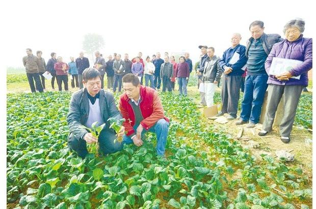 农机专家辅导优种优育知识