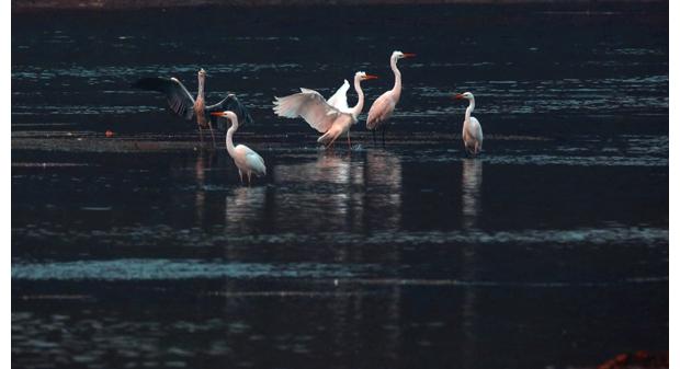 白云湖美景