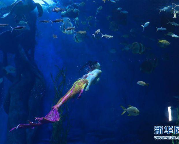 """梦幻""""美人鱼"""" 海底享清凉"""