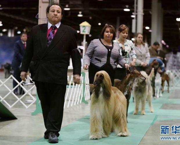 芝加哥的狗狗秀