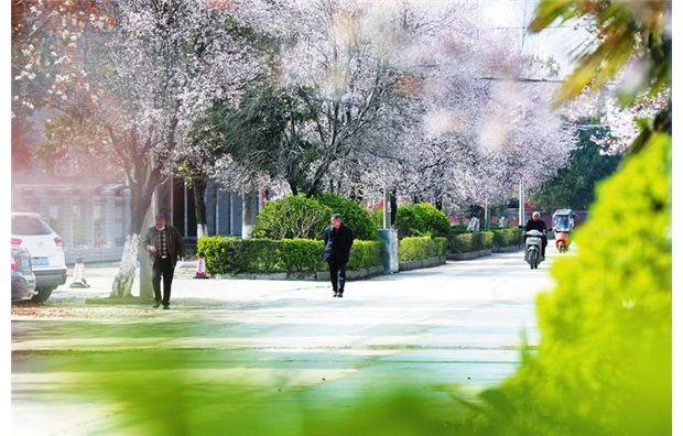 春天的画卷